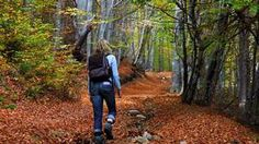 Why is walking in the woods so good for you?