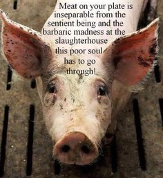 Meat on your plate is inseparable from the sentient being and the barbaric madness at the slaughterhouse this poor soul has to go through!