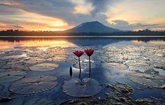 Morning Lilies - Eric Beltran. Sunrise at Sampaloc Lake, San Pablo City, Laguna, Philippines.