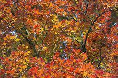 Herbstimpressionen von einem Kurzurlaub in München Süd - Spazieren Sie bei einem Urlaub in München Süd entspannt durch die farbenfrohe Parks und Wälder. Betrachten Sie wieder einmal bewusst die vielen verschiedenen Formen und Farben, die die Natur in dieser Jahreszeit an die Blätter der Bäume zaubert. Herzlich Willkommen im Waldgasthof Buchenhain