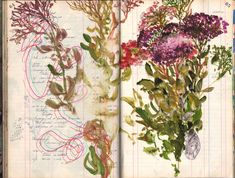 fields by Véronique Groseil Artist Journal, Artist Sketchbook, Art Journal Pages, Art Journals, Botanical Art, Botanical Illustration, Illustration Art, Sketchbook Inspiration, Art Journal Inspiration