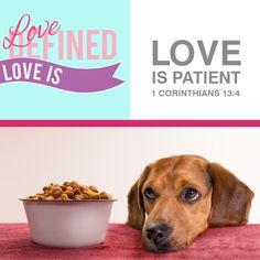 Love is patient #Bible #Love #Valentinesday #Scripture