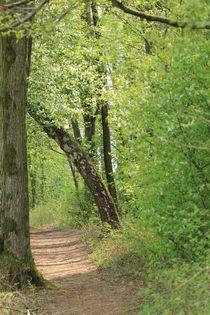 Waldweg-mit-birke