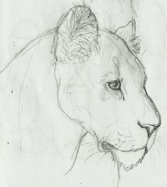 Lioness sketch by ~RichieIsNela on deviantART- I'm beginning to think I've figured out my front thigh tattoo.