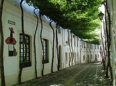 Túnel de árboles. Jerez España