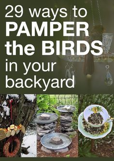 29 ways to pamper the birds in your backyard