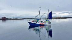 Årets skreifiske har vært svært innbringende for fiskerne. Så langt er det dratt opp fersk torsk for 1,9 milliarder kroner. Boat, Funny, Dinghy, Boats, Funny Parenting, Hilarious, Fun, Humor, Ship