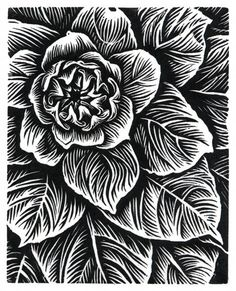 "The macro-world - explore exciting symmetry, texture, depth and contrast - take macrophotos of a succulent garden in black and white then reinterpret as black and white linocuts - mount photo and lino side by side - image inspiration: Theresa Haberkorn: ""Mullein"" Wood Engraving"