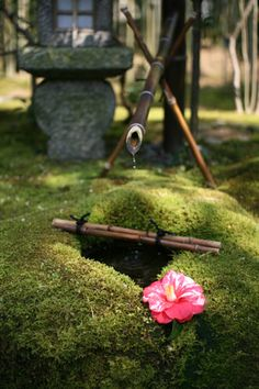 Mossy Japanese Garden and Tsubaki Flower (Kyoto, Japan)