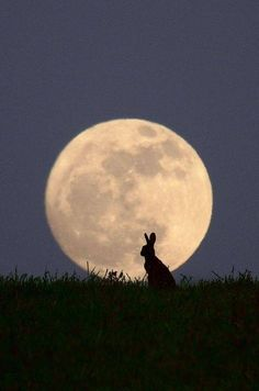 moon and rabbit!