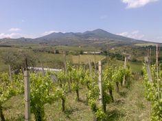 L'Aglianico del Vulture è un vino DOC del vitigno Aglianico, la cui produzione è consentita nella zona del Vulture, in provincia di Potenza (Basilicata). Con oltre 1500 ettari di superficie iscritta all'Albo dei vigneti e dei vini DOC, è annoverato tra i più grandi vini rossi d'Italia. Le aziende del settore nel territorio del Vulture sono circa quaranta e producono, annualmente, circa due milioni e mezzo di bottiglie. Conosciuto come il vino dei Romani per la sua antichità.