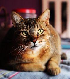 Gato Juca: um caçador de ratos inadimplente. #gato