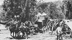Cobb and Co coach.A♥W Glasshouse Mountains, Paranormal Romance Series, Historical Pictures, Coaches, Family History, Old Photos, Colonial, Vietnam, Transportation