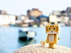 きょうはぽかぽかてんきにゃー  雨の日にネコの後ろに立ってた奴の正体ですヽ()ノw #ダンボー #ダンボー写真部 #ニャンボー #DANBOARD #nyanboard #danbo #instadanbo #猫 #ねこ #ネコ #cat #cats #靹の浦 #igersjp #igersjapan #icu_japan #team_jp_ #ig_cameras_united #ig_japan #toystagram by yaki0555