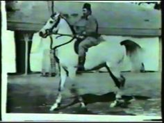 ▶ Imperial Egyptian Stud - The Early Breeding Program - YouTube