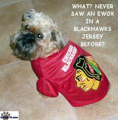 Chicago Blackhawks dog (spawty). :)