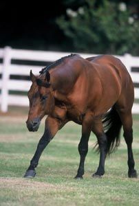 Reichert Horse Company, Protect Your Assets AQHA