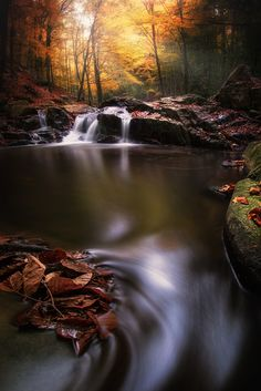AUTUMN IN FOREST IV by Lluis  de Haro Sanchez on 500px  )