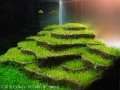 2012 AGA Aquascaping Contest - Entry #368