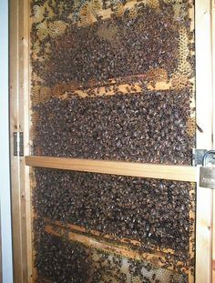 Honey Bees,  the Outside of what tastes Good inside ..never swat them, just push them on their way.