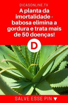 Babosa remedio | A planta da imortalidade - babosa elimina a gordura e trata mais de 50 doenças! | Ela é poderosa, mas tem que saber usá-la. Aprenda agora.