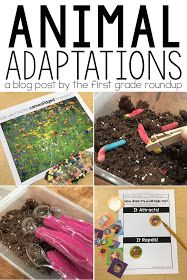 Firstgraderoundup : Animal Adaptation Stations