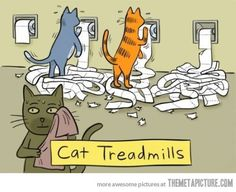 Cat Treadmills :D I've been lucky not to have one of these types of kids =^..^=