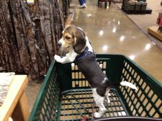 Shadow shopping at Cabelas. (2 months old)