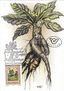 8 Best Mandrake Maybe Images Botanical Illustration Botanical