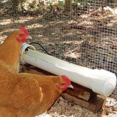 How to Make a Homemade Automatic Chicken Waterer