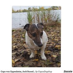 Shop Capo von Oppenheim, Jack Russell Terrier Dog Jigsaw Puzzle created by CaposDogshop. Terrier Dogs, Boston Terrier, Animal Skulls, Jack Russell Terrier, Pink And Green, Camouflage, Jigsaw Puzzles, Kids Shop, Puppies