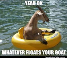 Whatever Floats Your Goat! - See more funny pics @ www.FunnyOnlinePictures.com :)