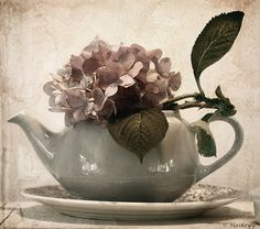An old teapot in blue by petrus regout with a flower of the hydrangea | By Haikey