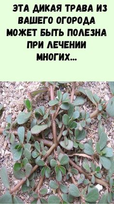 Medicine For Heartburn, How To Dry Basil, Herbs, Plants, Health, Herb, Plant, Planets, Medicinal Plants