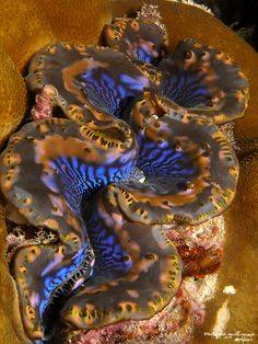Sea Clams, Ocean Video, Saltwater Aquarium Fish, Salt Water Fish, Sea Snail, Sea Slug, Colorful Animals, Ocean Creatures, Beautiful Ocean