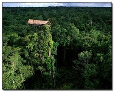 10. Treehouse, Korowai Tribe, New Guinea - This house is a conventional home for the Korowai tribe. They don't do things half way, the house is 165 feet from the ground, or more than 50 meters. At this height, they avoid being invaded by ants and other predators, and they're also protected against floods.