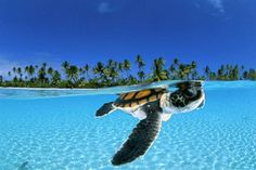 tropical turtle