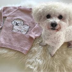 The Dennis sweater is a fast knitted sweater with thick yarn and needles. The dog is embroidered with duplicate stitches. Bichon Frise, Magic Loop, Thick Yarn, Circular Needles, White Beige, Yarn Needle, Main Colors, Knitting Patterns, Teddy Bear
