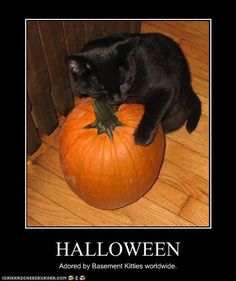 funny-cat-halloween-pictures