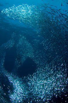 Fesdu House Reef, Maldives by Hamid R.