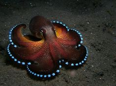 Awesome coconut octopus...