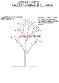 taille rable du japon taille japonaise sentei jardin pinterest acer palmatum japanese. Black Bedroom Furniture Sets. Home Design Ideas