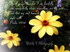 Psalms. HolyBible. NatalieVPhotography. Bible Verses of Encouragement. Find my page on Facebook. Psalm 139 14, Encouraging Bible Verses, Psalms, Encouragement, Facebook