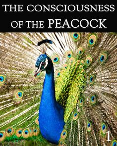 The Consciousness of the Peacock - Part 4 Change Is Good, Change My Life, Animal Consciousness, Here On Earth, Other People, Decir No, Peacock, Real Life, Self