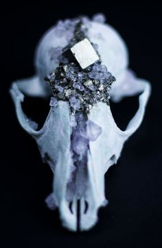 Pyrite & Lilac Crystallized Fox Skull  Animal Skull by Tessasfinds