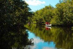 Kayak trails in Everglades National Park: The best way to experience it