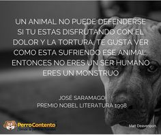 Todos contra aquellos que maltratan a los animales, ellos no están solos!