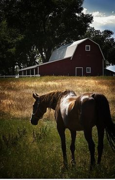 horse in pasture by the barn