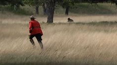 Maximum CanCon? Mountie in red serge chases bear from Alberta town : The Loop