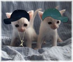 Kittens by gun-no-inu.deviantart.com on @deviantART